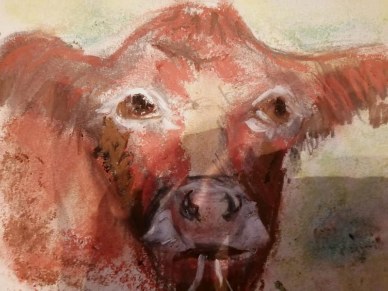 Cow by Lucy Calcott