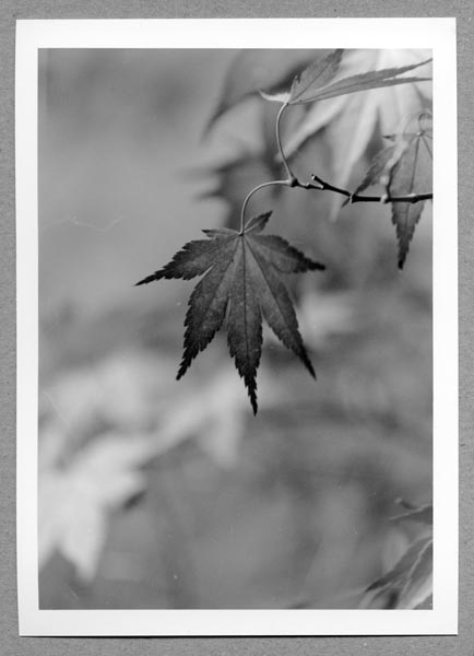 Leaf by Ben J Cottingham
