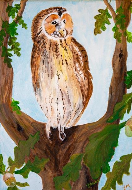 Tawny Owl Janet Mazumdar
