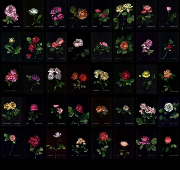 roses-by-elizabeth-doak